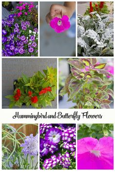 BUTTERFLY AND HUMMINGBIRD GARDEN. Attract creatures to your garden. #ad #ourcaringhands
