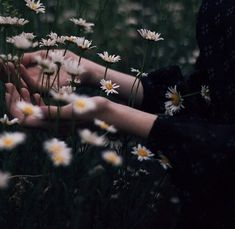let's walk through the daisies and pretend we're in love