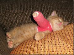aww kitten broken arm...tell me it doesnt melt your heart