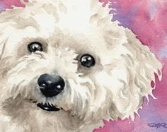 BICHON FRISE Dog Watercolor Art Print Signed by by k9artgallery