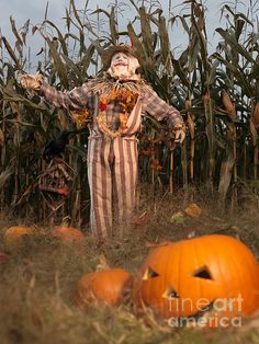 Scarecrow and pumpkins in a corn field Halloween theme Fall Family Picture Outfits, Fall Family Pictures, Halloween Scarecrow, Fall Halloween, Vintage Halloween Decorations, Halloween Themes, Corn Maze, Writing Art, Happy Fall Y'all