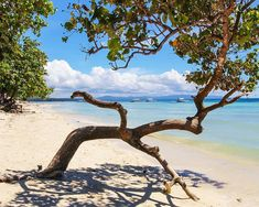 Lone tree on dumaluan beach Bohol Philippines, Lone Tree, Lonely, Beach, Places, The Beach, Beaches, Loneliness, Lugares