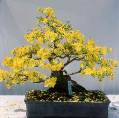 bonsai-viet-nam-03.jpg (400×398)