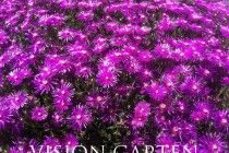 Gartengestaltung (20)