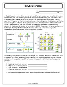 Inheritance Activities: Genetics Terminology & Punnett Squares | A ...