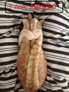 ☮✿★✝ CATS ✝☯★☮