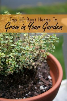 Best & Easiest Herbs to Grow in a Garden or Container | Apartment Therapy