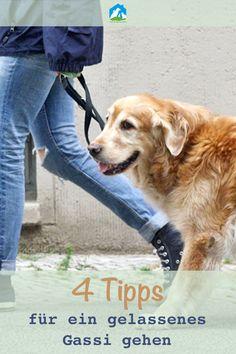 Wir haben in unserem Hunde Blog 4 Tipps für ein gelassenes Gassi gehen für Dich! Das Zerren an der Leine gehört endlich der Vergangenheit an! www.haustier-notfallkarte.de/hunde-blog