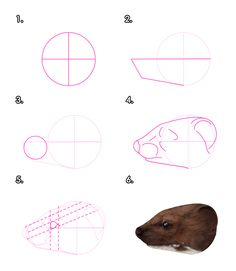 How to Draw Animals: Weasels, Stoats, Minks, Polecats and Ferrets - Envato Tuts+ Design & Illustration Tutorial