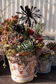 Succulents in old pots