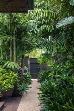 Behind a steel black gate lies an unexpected tropical garden in the heart of Melbourne. Lush palm tree canopies flank the garden path Tropical Garden Design, Tropical Landscaping, Garden Landscaping, Tropical Gardens, Landscaping Ideas, Tropical Patio, Tropical Houses, Tropical Flowers, Tropical Plants