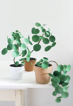 La plante verte à la mode ! source pinterest  Pilea peperomioides, aussi connue sous l'appellationplante à monnaie chinoise,(en)pancake plant,(en)lefseplantoupla