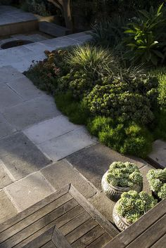 Succulents in bowls .#peterfudge Bush Garden, Hillside Garden, Sloped Garden, Fudge, Contemporary Landscape, Landscape Design, Drought Tolerant Garden, Australian Garden, Garden Inspiration