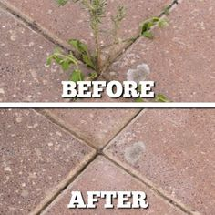 This Natural Weed Killer REALLY Works!