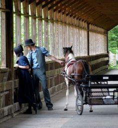 PONY CART WITH A OPEN COURTING BUGGY......A Young couple