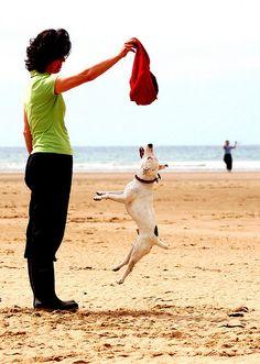 Jumping Dog by Johnny Jet, via Flickr