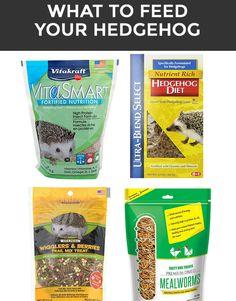 What to feed your hedgehog #hedgehog #hedgehogtips #hedgehogfood