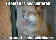 ...I wish a fox would come lick MY window. ;[