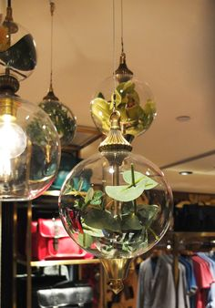 32fe65fb5 Glass globes with foliage hanging in a Ted Baker clothing shop by  Rothschild   Bickers Ted