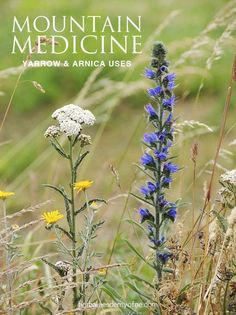 Mountain Medicine: recipes for Using Arnica and Yarrow in a first aid kit