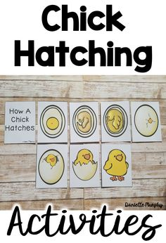 Perfect for Hatching Chicks in your room or Spring!  Chick Non Fiction unit for Kindergarten, First, Second Grade!  Reader, Life Cycle activities, printables, and more!