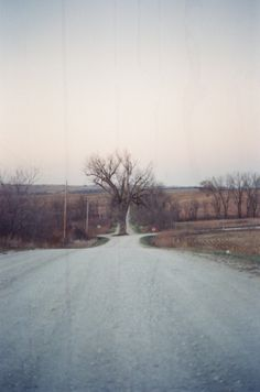 meridithgrahamart:  The tree in the middle of the road Shot with 35 mm -Meridith Graham
