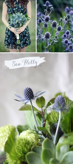 Sea holly | At Home in Love