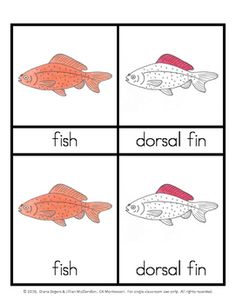 """Montessori 3 part (or """"nomenclature"""") cards are used to teach a child the names of the various parts of something, in this case a fish.  There are three cards for each part, a control card which has both the picture and the label, a card with only the picture and a card with only the label."""