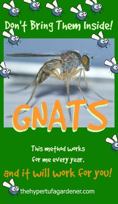 Bring The Plants Indoors, But Not Gnats!