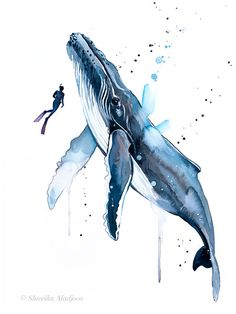 Scuba Diving With Humpback Whale Watercolor Painting Print By Slaveika Aladjova Art Animal Illustration Sea Art Sea Life Art Home Decor Scuba Diving With Humpback Whale Watercolor Painting Print By Etsy Whale Drawing, Whale Painting, Watercolor Whale, Watercolor Paintings, Sea Drawing, Painting Art, Watercolor Paper, Watercolor Artists, Painting Lessons