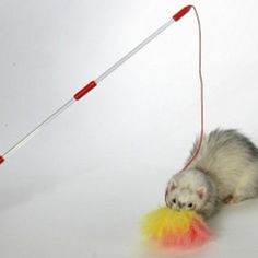 Ferret Teaser Toy