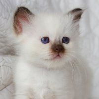 I don't even like cats. But this one is pretty darn cute.