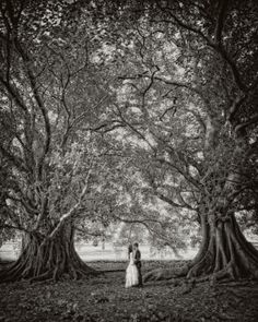 Trees with couple kissing by TerriInVA