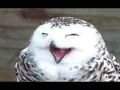 Funny & Cute Owl Videos Compilation 2014 [NEW] - YouTube