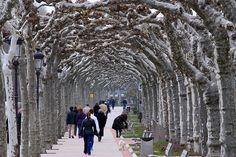 Crossing Trees | Burgos,Spain