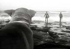 Thru man's best friend eyes. They probably thought the water was too rough for their dog. WOW!