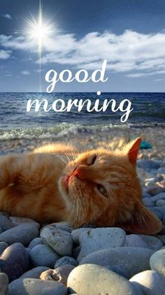 Good Morning Cat, Good Morning Beautiful Quotes, Good Morning Images Hd, Good Morning Greetings, Good Morning Wishes, Morning Msg, Cute Good Morning Pictures, Messages Bonjour, Kitten Quotes