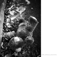 쉽게 슬퍼하지 못해...  모든 것들을 잃어버릴까봐...    #contax #t2 #snap #photo #사진 #감성사진 #일상 #daily #대구 #film #filmcamera #35mm #analog #필름스타그램 #photoholic #filmholic #김군_photography