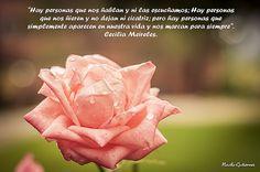Rosa con mensaje