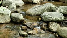 forest rocks - Google Search