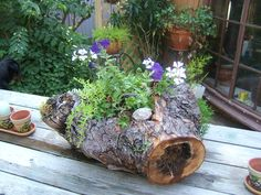 Trees are being cut down now that are in the footprint of the new house...this is a wonderful use for some of the interesting pieces...letting the tree nurish flowering plants.