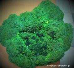 brocoli frozen