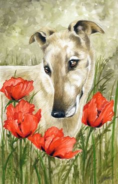 Hound with Poppies from Retired Greyhound Trust!