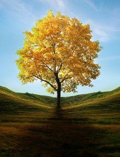 This is Venezuela's National Tree, it's beautiful :D