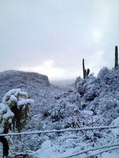 Dove mountain, Tucson, arizona snow covered saguaro cactus