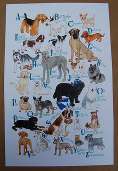 ABC's of Dog Breeds: Airedale, Bull Terrier, Chihuahua, Dauchshund... 11x17 Print. $25.00, via Etsy.