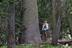 American Forests features Conifer Country - Backcountry Press