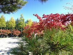 Wer jetzt pflanzt spart sich viel gießen, denn nächste Woche kommt der Regen!   #garten #blumen #pflanzen #gärtner #gärtnerei #sommer #herbst #gartenliebe #blütenmeer #kriegergut #baumschule #perg #schwertberg #leonding #linz #amstetten #naarn #mauthausen Plants, Landscape Nursery, Landscape Diagram, Planting Flowers, Linz, Rain, Autumn, Summer, Plant