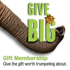 Gift Memberships to Zoo Atlanta come in one convenient gift card with a free plush. Order by December 15 for holiday delivery!
