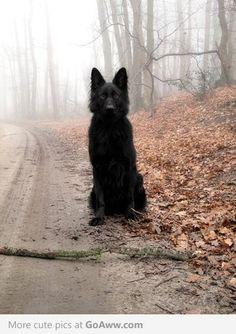 Black German-Shepherd, I feel like he would be extra intimidating.
